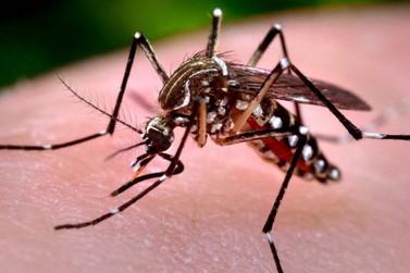 Paraná está em estado de alerta por epidemia de dengue