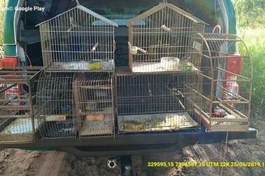 Polícia Ambiental encontra aves silvestres em cativeiro em 2 cidades do noroeste