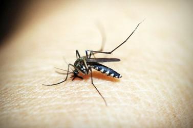 Paranavaí entra para a lista dos municípios em epidemia de dengue, diz Sesa