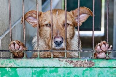 Requerimento sugere desconto no IPTU para quem adotar animais em Paranavaí