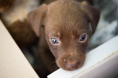 Neste sábado (14) tem feirinha de adoção de animais em Paranavaí