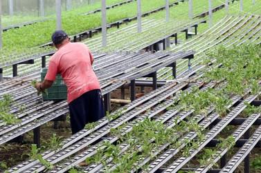Produtores rurais sem comercialização podem perder cadastro