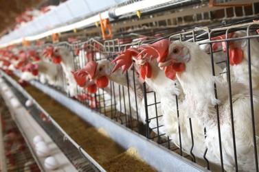 Atualização cadastral de animais termina dia 30 no Paraná