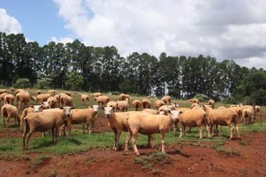 Termina nesta sexta-feira prazo para cadastro de animais no Paraná