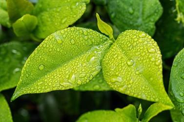 Semana terá tempo quente e previsão de chuvas entre quarta e quinta em Paranavaí