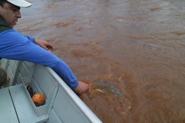 Justiça suspende resolução que permitia pesca de espécies nativas no Paraná