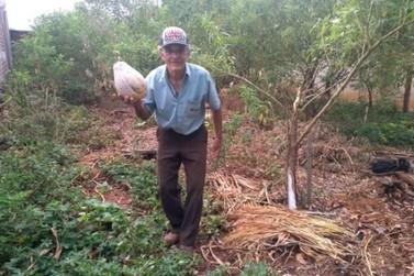 Em tempos de dengue, idoso transforma terreno baldio em horta produtiva