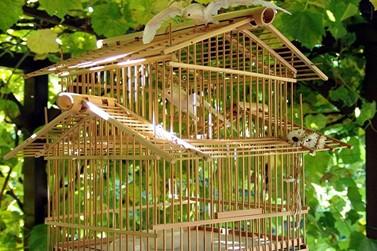 Gaiolas com três pássaros são furtadas em Paranavaí