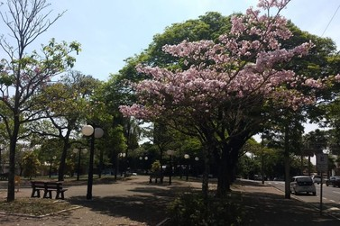 Estação das flores: Primavera começa nesta terça-feira (22)