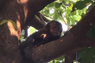Macaco aparece em cima de árvore no jardim Ipê
