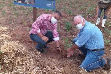Regional do IAT em Paranavaí promove plantio para comemorar Dia da árvore