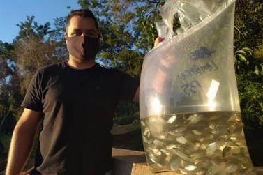 1,3 mil peixes são soltos no lago do Parque Ouro Branco,  em Paranavaí