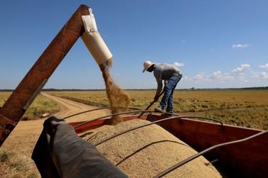 Santa Isabel do Ivaí lidera produtividade do arroz irrigado no Paraná