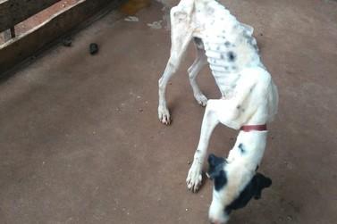 Três cachorros em situação de maus-tratos são resgatados no conj. Ettore Giovine