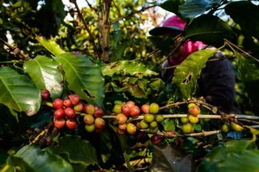 Paraná emite alerta de geada para a região cafeeira do estado