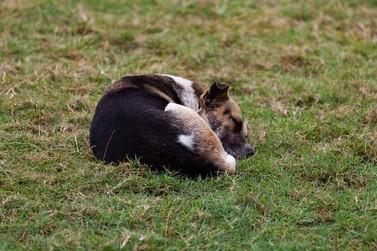Projeto de lei propõe que agressores paguem tratamento de animais maltratados