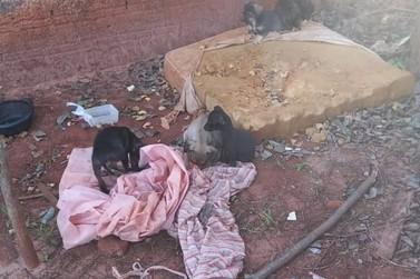 Guarda Municipal resgata oito cachorros abandonados no jardim São Jorge