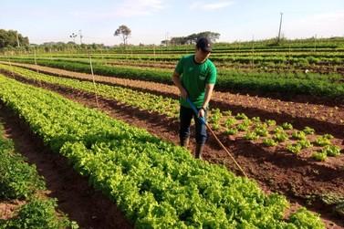 Produtores de verduras de Paranavaí se preparam para a chegada de frio intenso