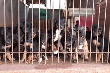 Nos últimos dias, Spap recebeu mais de 40 filhotes abandonados em Paranavaí