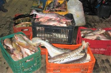 Defeso proíbe pesca de espécies como dourada, jatuarana, filhote e outros