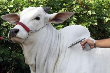 Vacinação contra febre aftosa será extinta em Rondônia