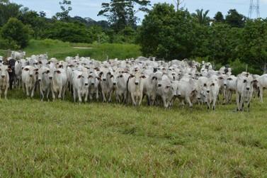 Agronegócio sustenta a economia de Rondônia e supera crescimento médio nacional