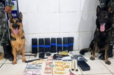 Cães farejadores da PM localizam 9 kg de drogas em residência na Capital