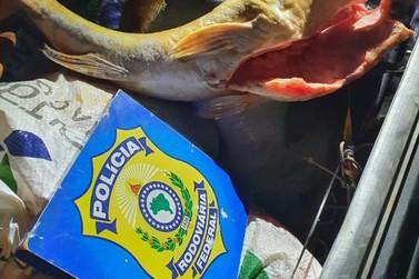 PRF apreende cerca de 400 quilos de pescado ilegal em Porto Velho