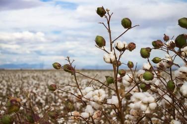 Safra recorde no estado deve superar 2 milhões de toneladas de grãos