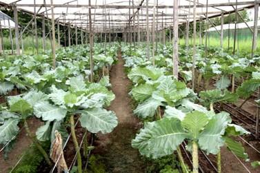 Semagric abre cursos de agroecologia para produtores e associações de bairros