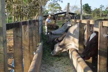 Dia 30 é a última chance para declarar o rebanho em Rondônia