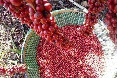 Governo discute criação de novo programa de comercialização e incentivo do café