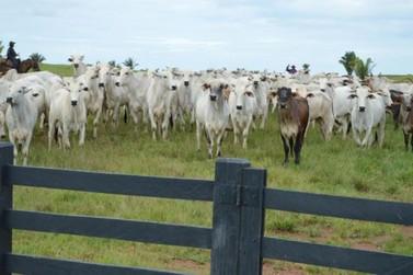 Cerca de 90% dos produtores já declararam rebanho à Idaron