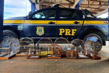 PRF intensifica o combate a crimes ambientais