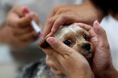Centro de Zoonoses oferece vacina contra raiva para cães e gatos em Porto Velho