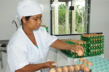 Governo reduz tributos e incentiva a comercialização de ovos produzidos em RO