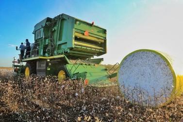 Colheita de algodão inicia com perspectiva de manter a produção em alta em RO