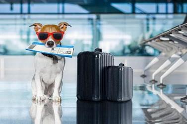 """Cresce número de brasileiros que pretendem viajar com seus """"pets"""""""