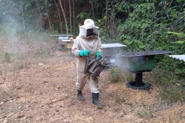Prefeitura de Porto Velho vai regularizar a criação de abelhas sem ferrão