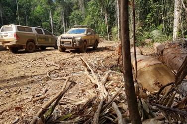 Operação Anhangá apreende 1,6 mil m³ de madeira em Porto Velho