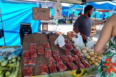 Calor e estiagem afetam produção e venda de morango no Sul de Minas