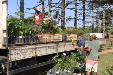 Projeto com apoio da Prefeitura vai distribuir mudas no Dia da Árvore