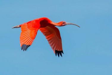 Dez aves para observar no seu próximo passeio no Vale do Ribeira