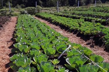 Estudantes da Ilha contam com verduras e legumes sem agrotóxicos