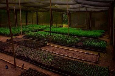 Vale do Ribeira terá seminário de plantas ornamentais