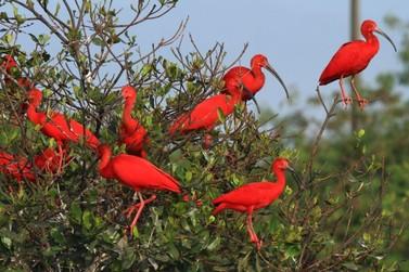Ilha Comprida está na rota de turismo de observação de aves