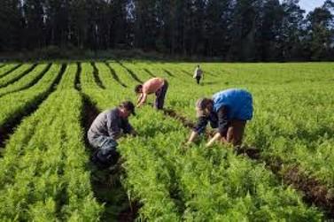 Pesquisa no Vale avalia o impacto de políticas públicas na agricultura familiar
