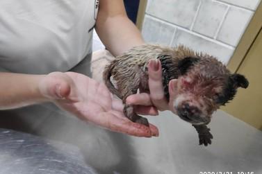 Polícia Ambiental salva filhote de cachorro vítima de maus tratos