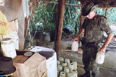 PM Ambiental desativa fábrica clandestina de palmito juçara em Eldorado
