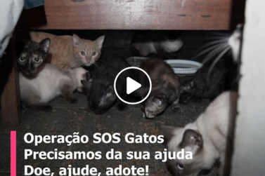 Projeto Digital lança vídeo campanha para ajudar senhora que cuida de 15 gatos